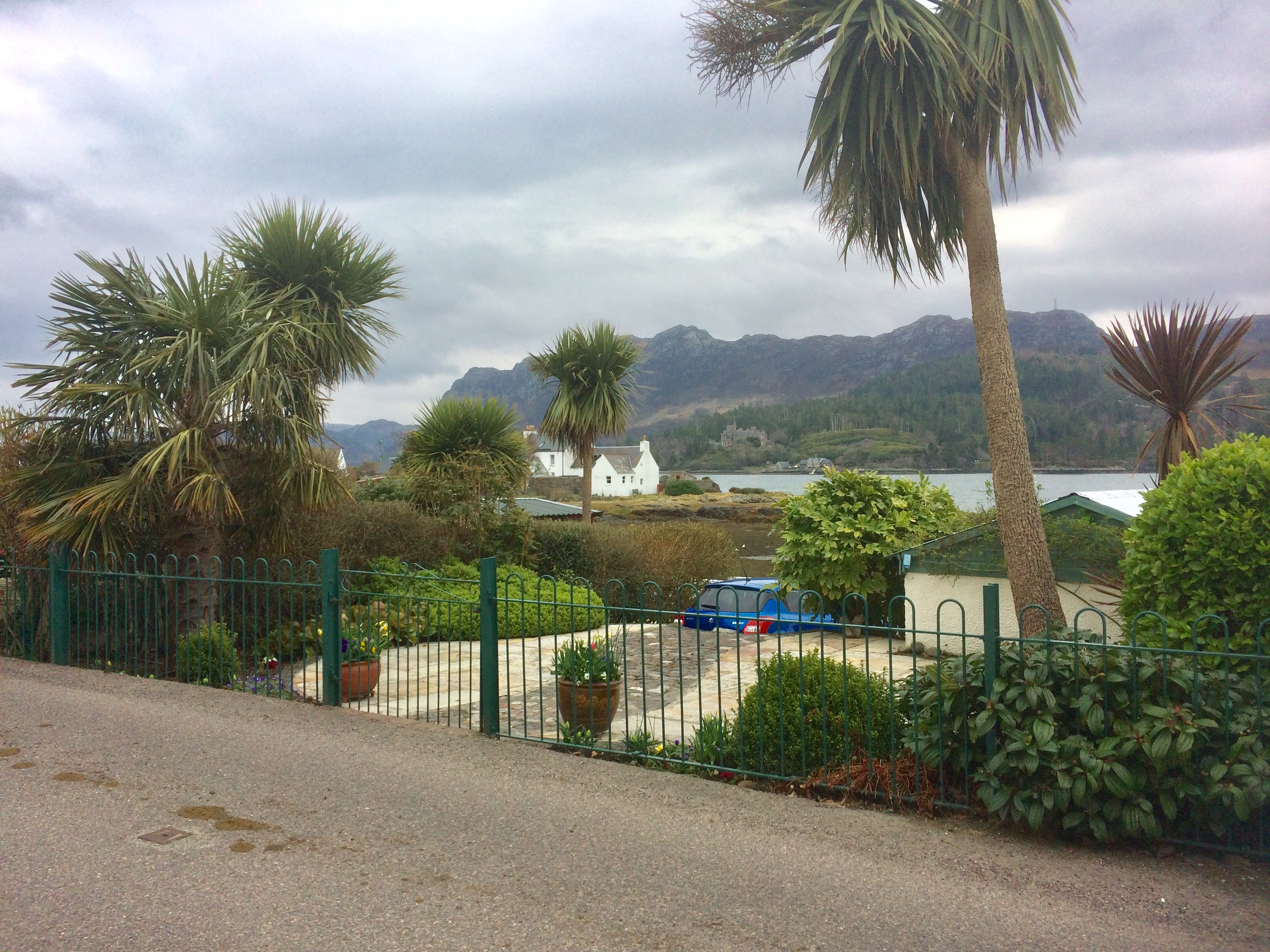 Plockton with palm trees